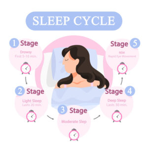 There are 5 stages during the sleep cycle.